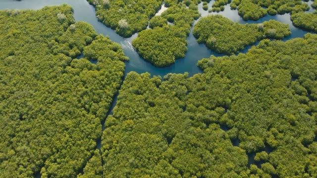Mangrove-forest-in-Asia