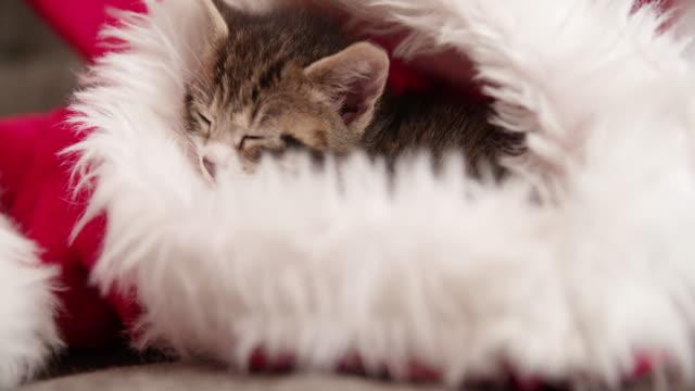 Dormitorio-mascota-en-una-mascota-santa-sombrero-rojo-y-blanco