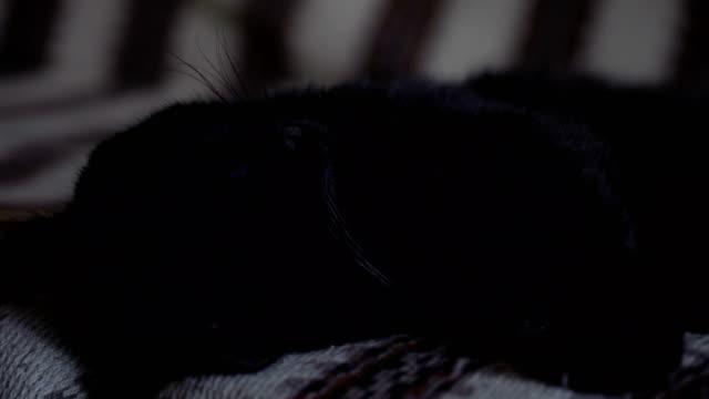 Gato-negro-dormido-en-el-primer-sofá