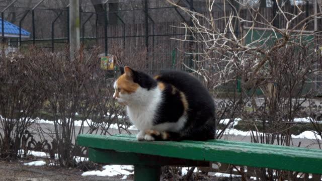 Gato-en-Banco-de-parque-público