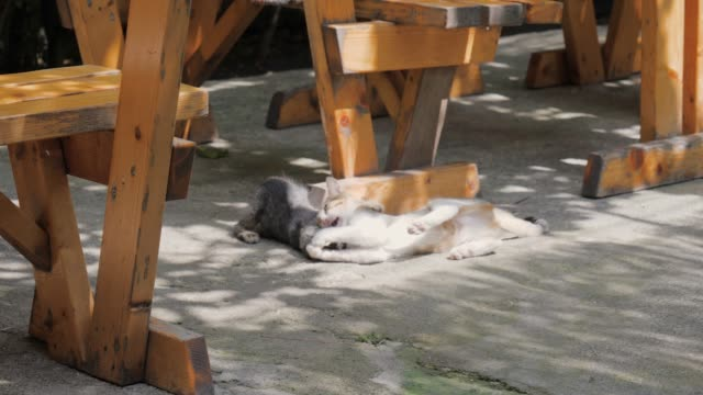 Two-Funny-Kittens-Playing-Under-The-Table-On-The-Summer-Terrace