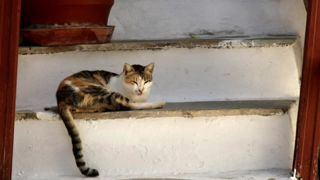 close-up-of-a-cat-sleeping-on-house-steps-at-mykonos-greece