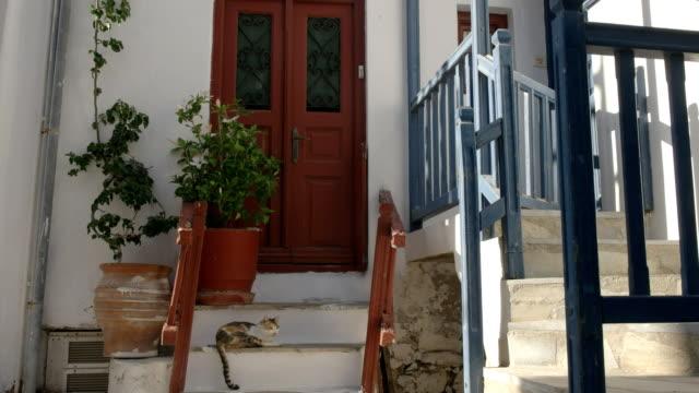 wide-shot-of-a-cat-on-house-steps-in-mykonos-greece