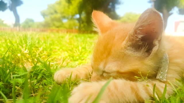 Retrato-de-bebé-gato-durmiendo-en-un-parque-
