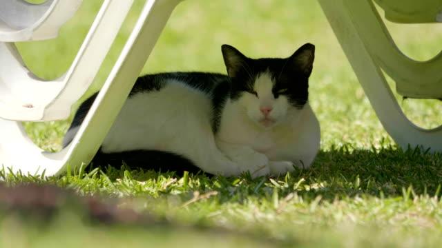 Katze-unter-Liege-schlafen-und-aufwachen-in-4-k-Slow-Motion-60fps