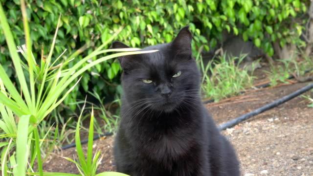 Blick-in-die-Kamera-in-Zeitlupe-4-k-60fps-Katze