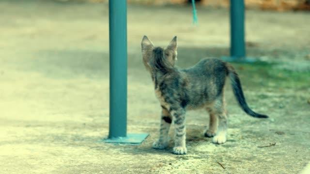 Tabby-kitte-play-alone