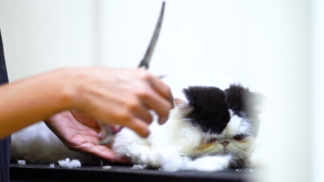 Cutting-cat-toenails-in-the-beauty-salon-for-dogs-and-cats