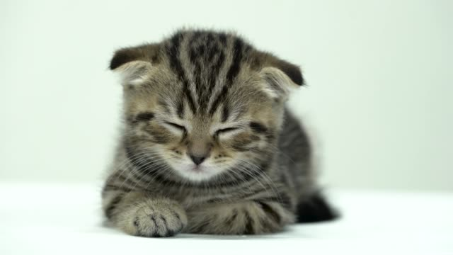 Small-kitten-is-sleeping-in-a-white-room