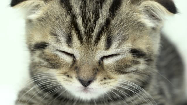Kitten-is-sleeping-in-a-white-room-Close-up