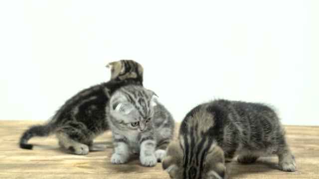 Agitated-kittens-run-around-in-different-directions-White-background