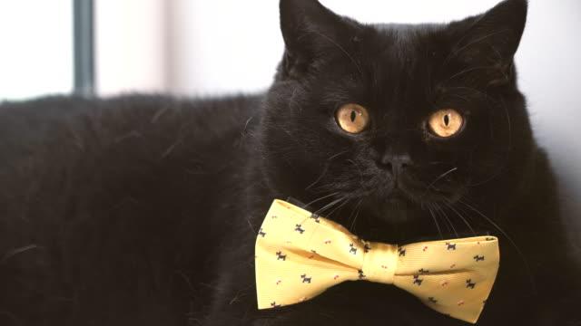 Gato-negro-Gato-negro-con-lazo-amarillo-está-en-la-repisa-de-la-ventana