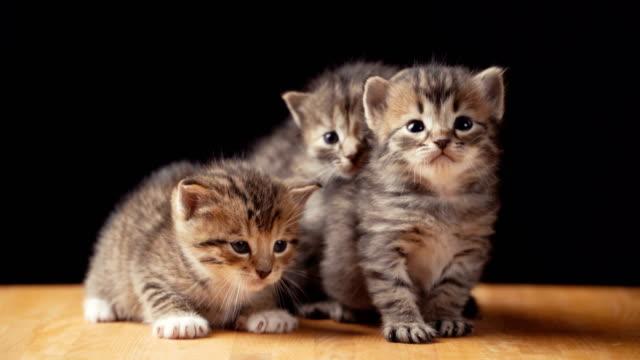 Footage-fluffy-kitten-sits-on-the-floor