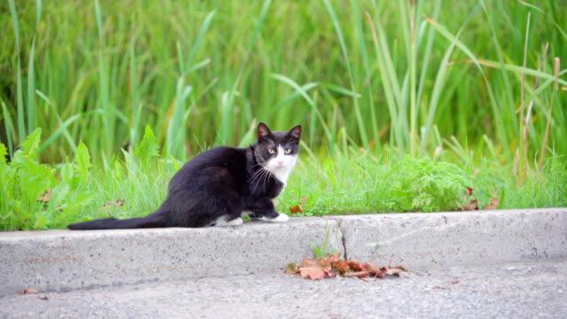 El-negro-gato-mira-fijamente-detrás-mientras-que-en-el-lado-de-la-carretera