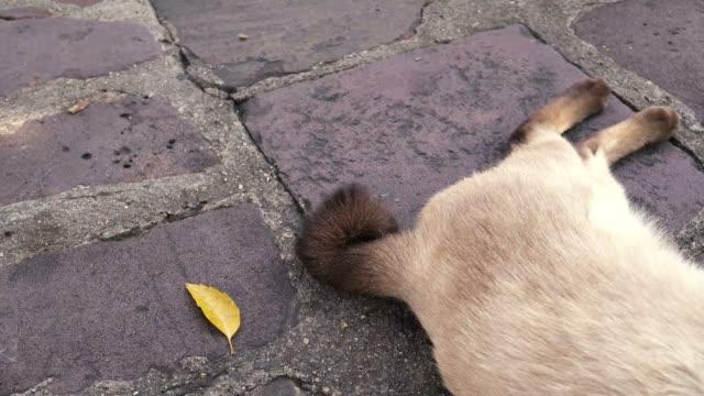 De-gato-cola-menear-y-ronroneando-mientras-duerme-en-la-calle