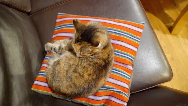 Un-gato-marrón-encima-de-la-almohada-naranja