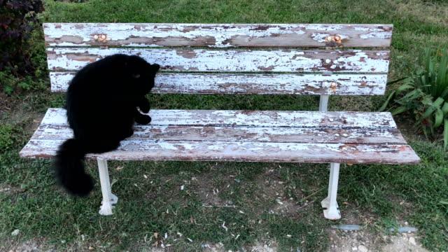 gato-en-el-jardín