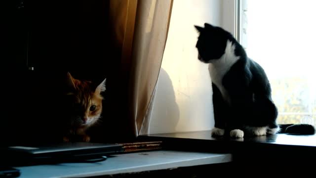 Gatos-peleando-jugar-en-casa-Gato-negro-acosa-jengibre-mascotas-divertidas-que-agita-las-patas