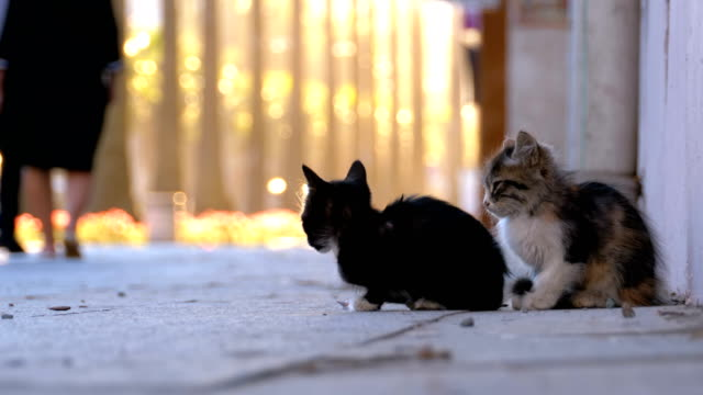 Two-Homeless-Kittens-on-the-Street-of-the-City