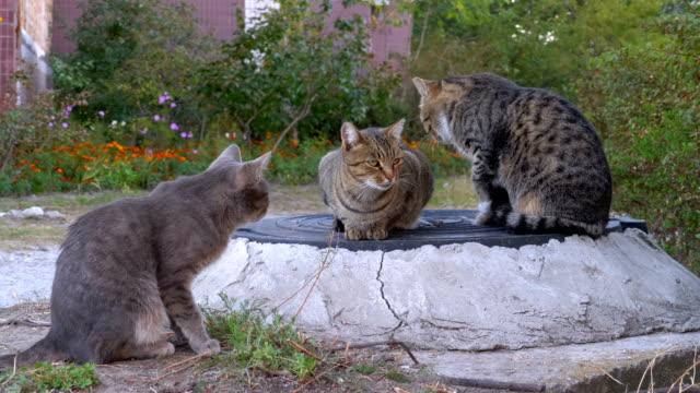 Tres-gatos-sin-hogar-de-gris-están-sentados-en-la-calle