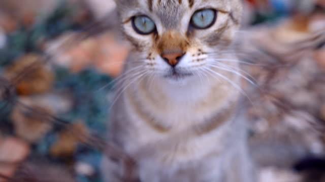 gato-callejero-detrás-de-los-barrotes-de-la-cerca-en-un-territorio-abandonado