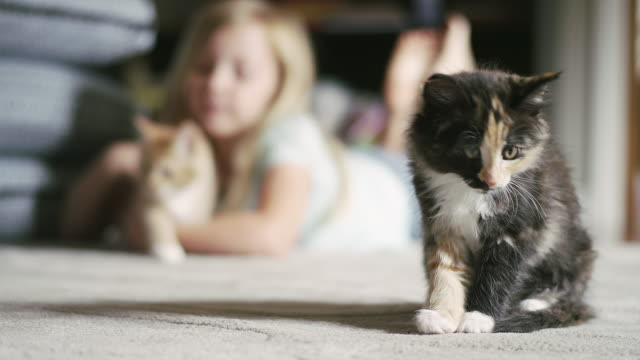 A-kitten-cleaning-himself-with-a-little-girl-petting-a-kitten-in-the-background