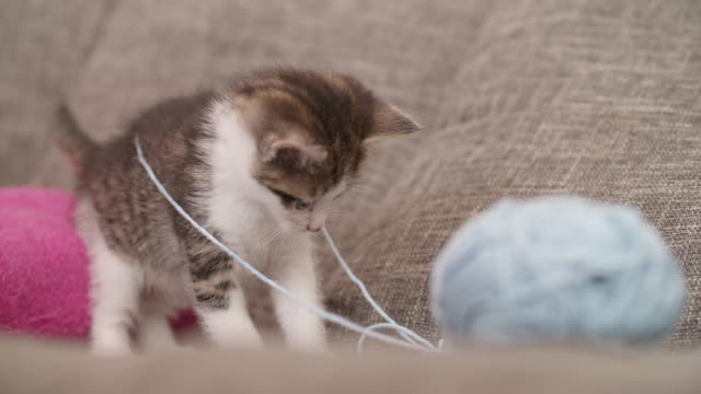 Kittens-playing-with-a-ball-of-wool-on-a-couch