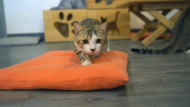 Cat-Stay