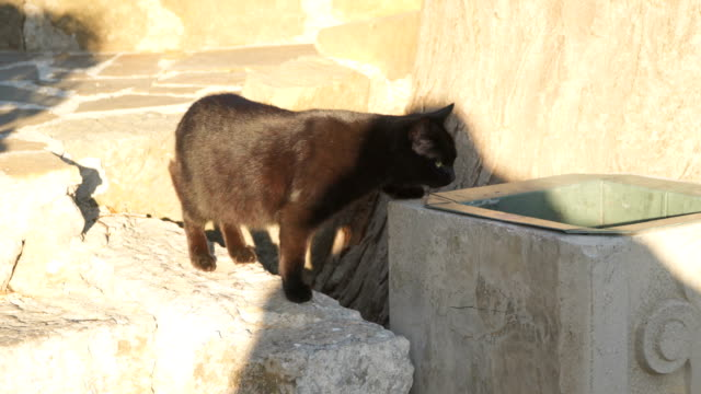 Black-cat-down-the-stairs