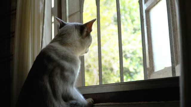 Cat-looking-outside-window