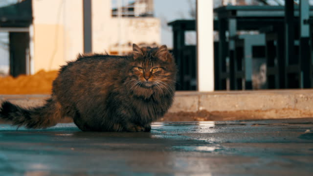 Homeless-Gray-Cat-on-the-Street-Eat-Food-in-Early-Spring