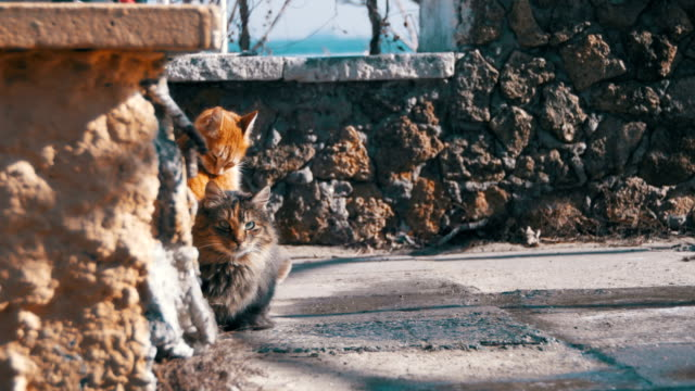 Homeless-Cats-on-the-Street-Eat-Food-in-Early-Spring