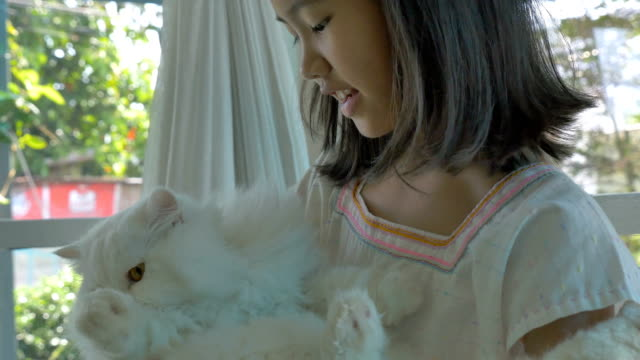 4K-:-Lovely-Asian-girl-plays-with-her-Persian-cat