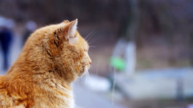 Homeless-Red-Cats-on-the-Street-Park-in-Early-Spring-Funny-Urban-Cat