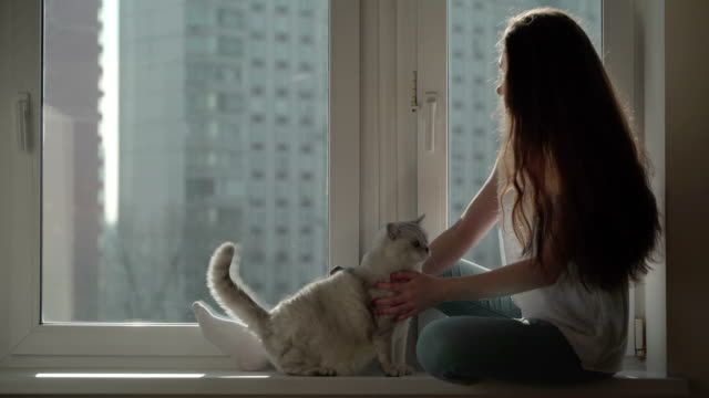 Concept-of-cat-hair-as-a-source-of-allergy-Concept-of-the-relationship-of-man-and-his-pet-