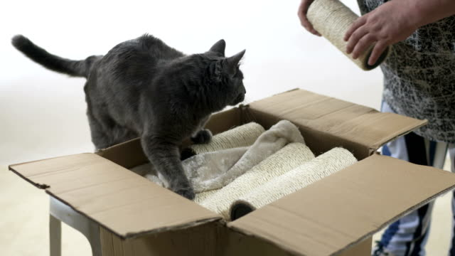 Modern-furniture-for-cats-and-kittens-unboxing-and-assembly