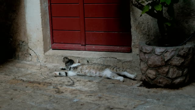 Cat-and-her-kitty-lay-on-the-street-near-the-home-with-red-door