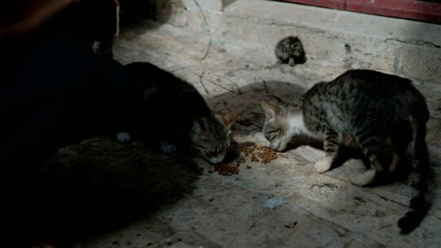 Dos-gatos-callejeros-comen-piensos-sobre-el-pavimento-de-piedra-cerca-de-la-casa