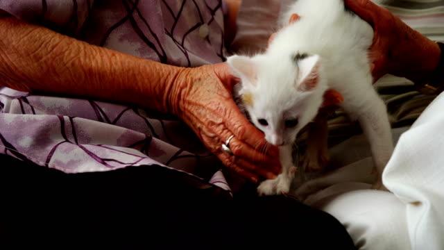 Senior-women-stroking-kitten-on-armchair-at-retirement-home-4k