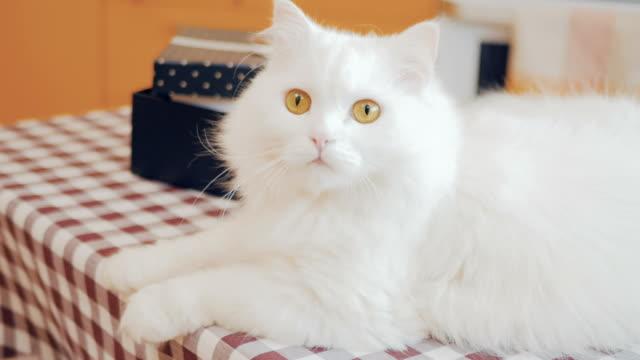 Charming-fluffy-cat