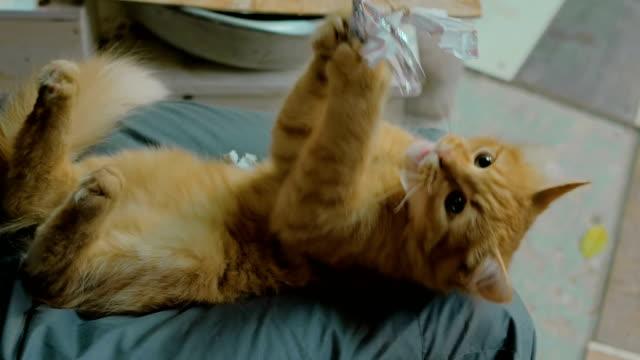 Kätzchen-mit-String-Spielzeug-spielen