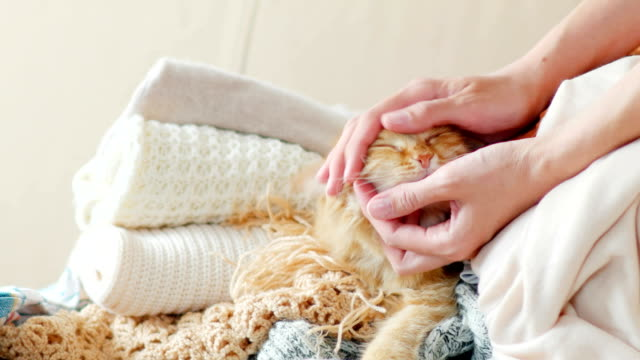 Cute-ginger-cat-sleeps-on-a-pile-of-knitted-clothes-Warm-knitted-sweaters-and-scarfs-are-folded-in-heaps-Fluffy-pet-is-dozing-among-cardigans-Man-strokes-his-pet-Cozy-home-background