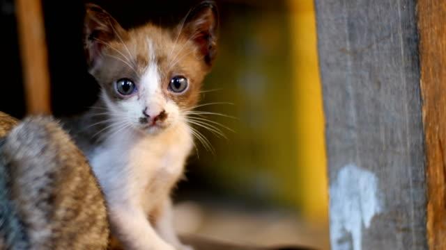 Gris-perdida-gatito-sentado-en-el-suelo-en-el-mercado-de-noche
