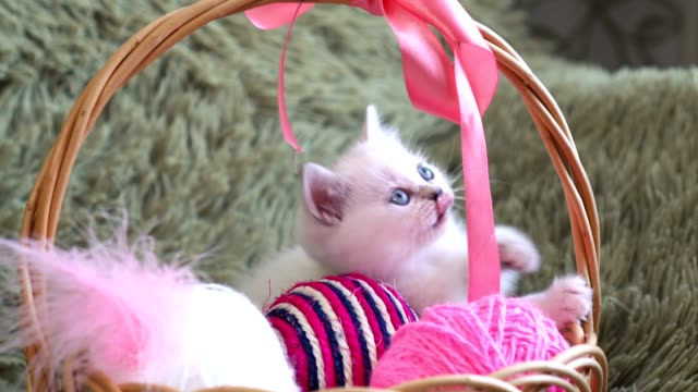 White-cute-kitten-sitting-in-a-basket-with-balls-of-wool