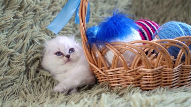 Weiße-süße-Kätzchen-liegt-in-der-Nähe-von-Korb-mit-Kugeln-aus-Wolle