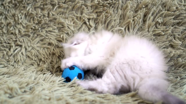 Small-cute-white-kitten-playing-at-football