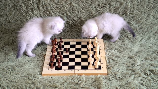 two-cute-kittens---grandmasters-playing-chess-on-the-couch