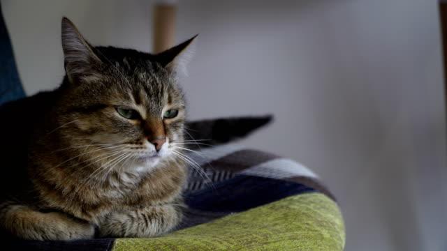 Interior-El-gato-se-sienta-en-una-silla-