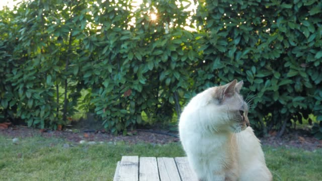 Retrato-de-gato-doméstico-en-iluminación-al-aire-libre-en-el-jardín-de-casa