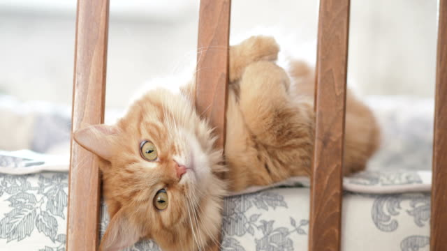 Cute-curious-ginger-cat-lying-in-child-bed-Fluffy-pet-poked-its-head-between-rails-of-crib-Cozy-morning-at-home